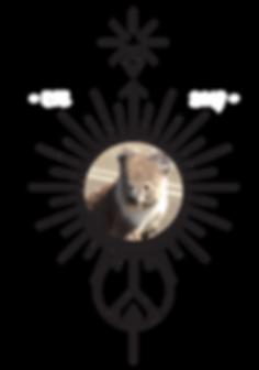 Wandering Souls Australi Logo with koala