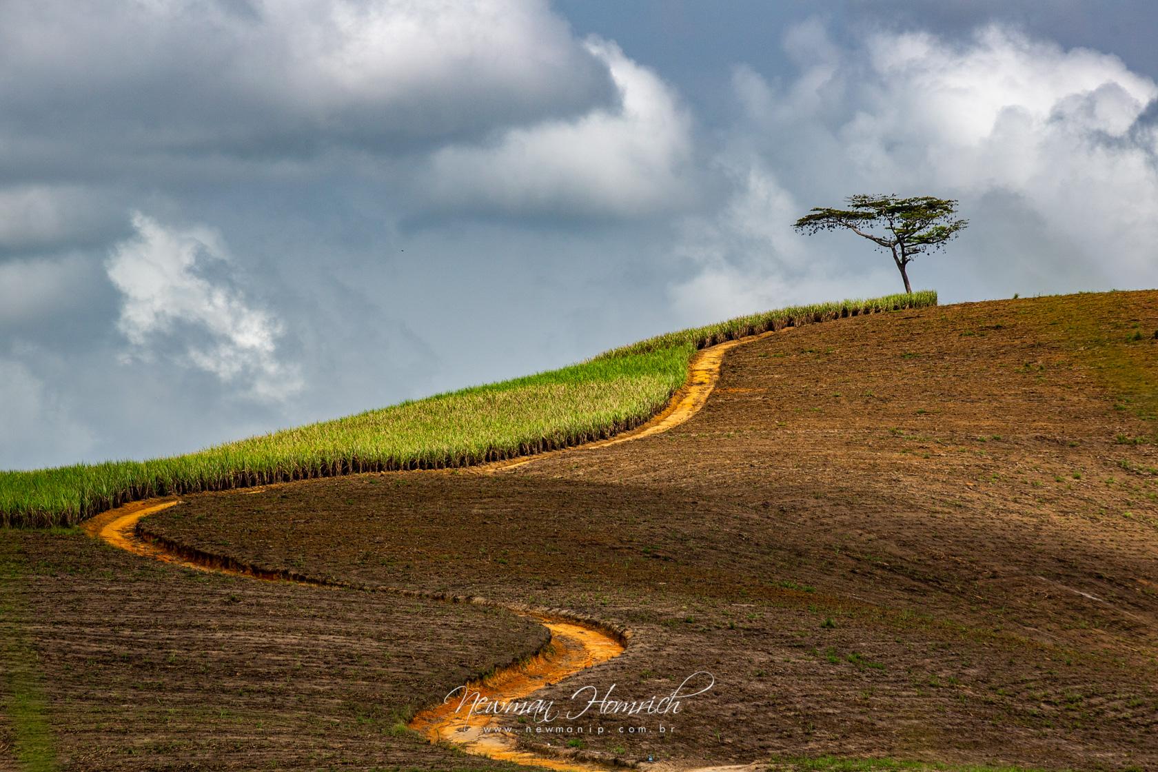 Treelha