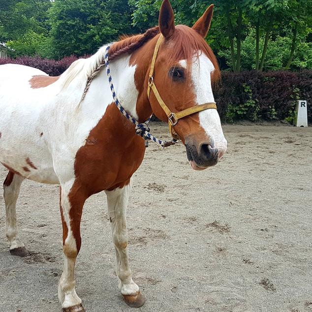 Equitation alain Ricquier.jpg