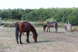 pré poneys et ânes haras rouen 76