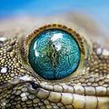 Sask Reptile Photo.jpg