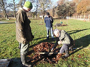tree planting, the field , Dunkeld