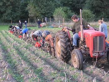 bringing the harvest home, Dunkeld