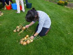 onion plaits