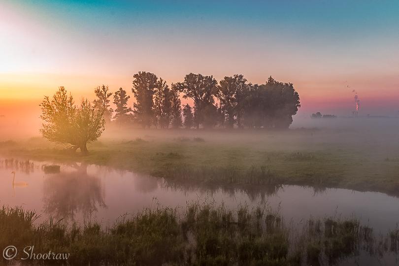 biesbosch-mist
