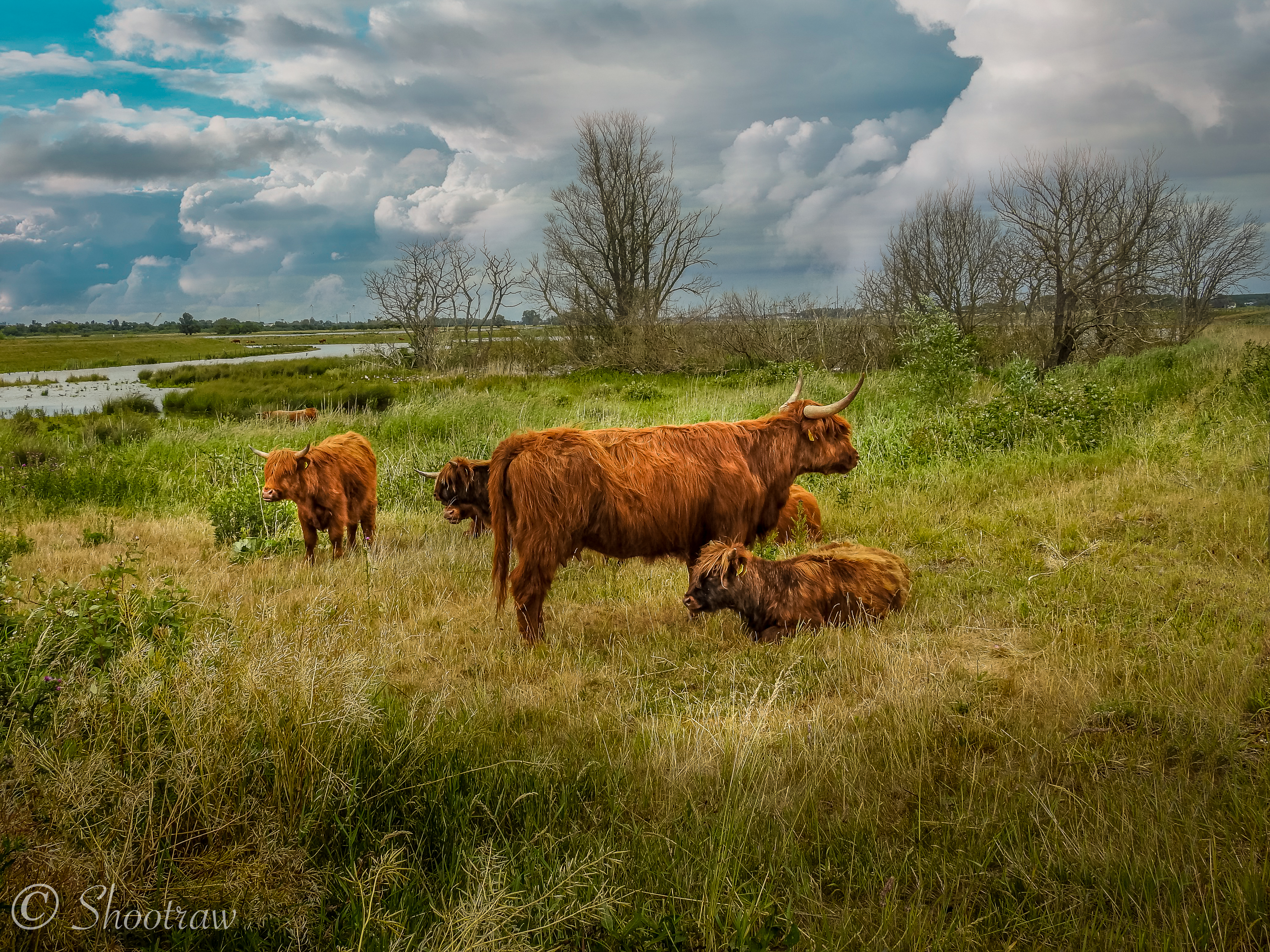 biesbosch-schotsehooglanders