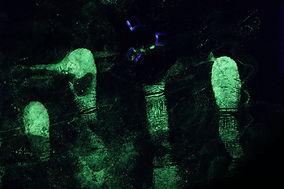 fingerprints - crime scene - CSI - forensic expert - latent prints