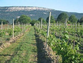 whitecliff-vineyard-winery.jpg