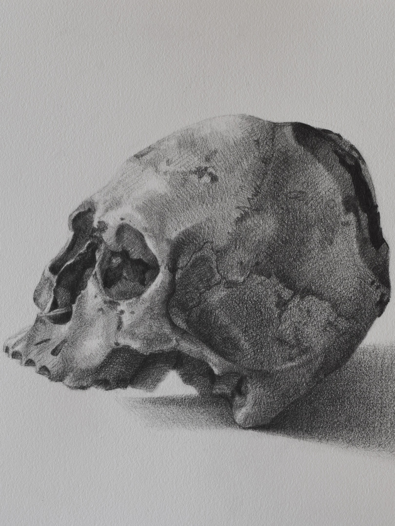 Peruvian Skull with Modification