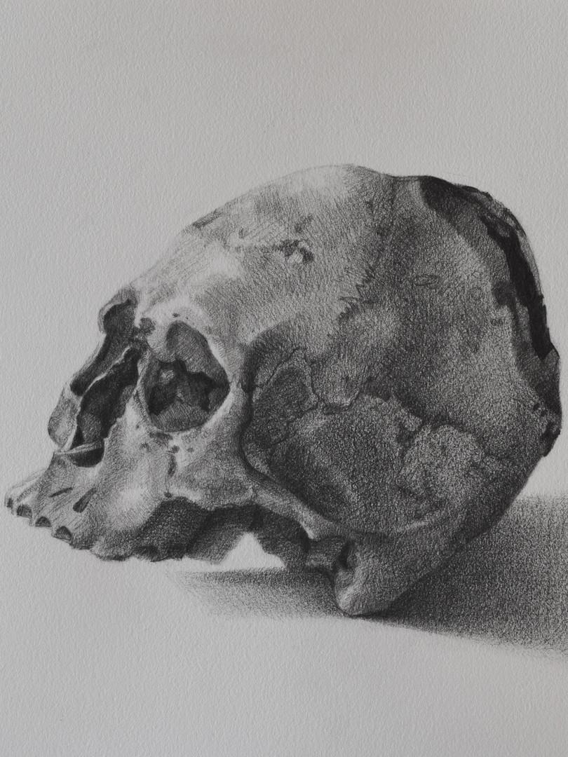 Peruvian Skull with Modification