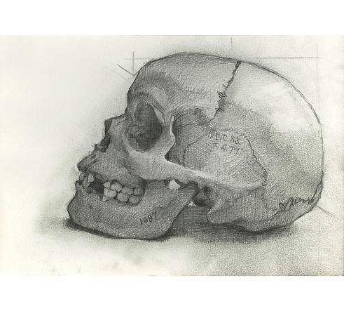 Morton Skull#1097