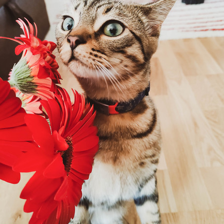 FLORITHERAPY for animals: why to use it