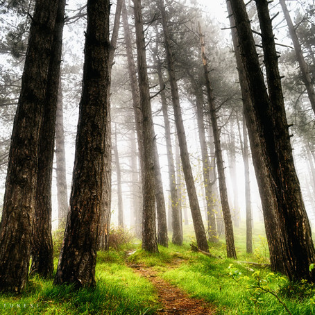 TREE THERAPY: what it is and why to practice!