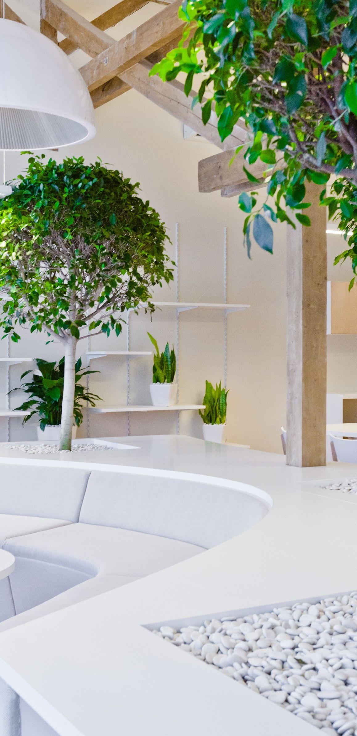 Озеленение ресторанов