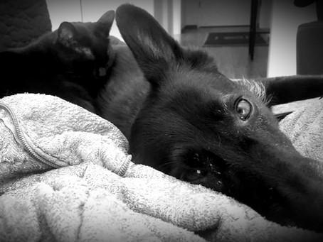 Depression - *Die Geschichte vom schwarzen Hund - Erfahrungsbericht von Frances