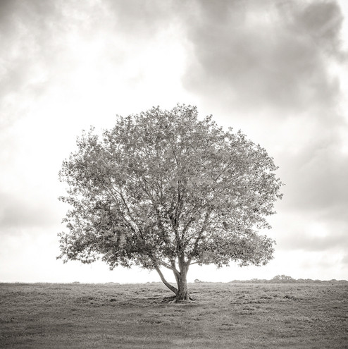 Deerfield road tree