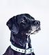 rawdog.webp