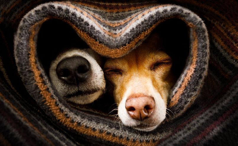 dogsinheart.jpg