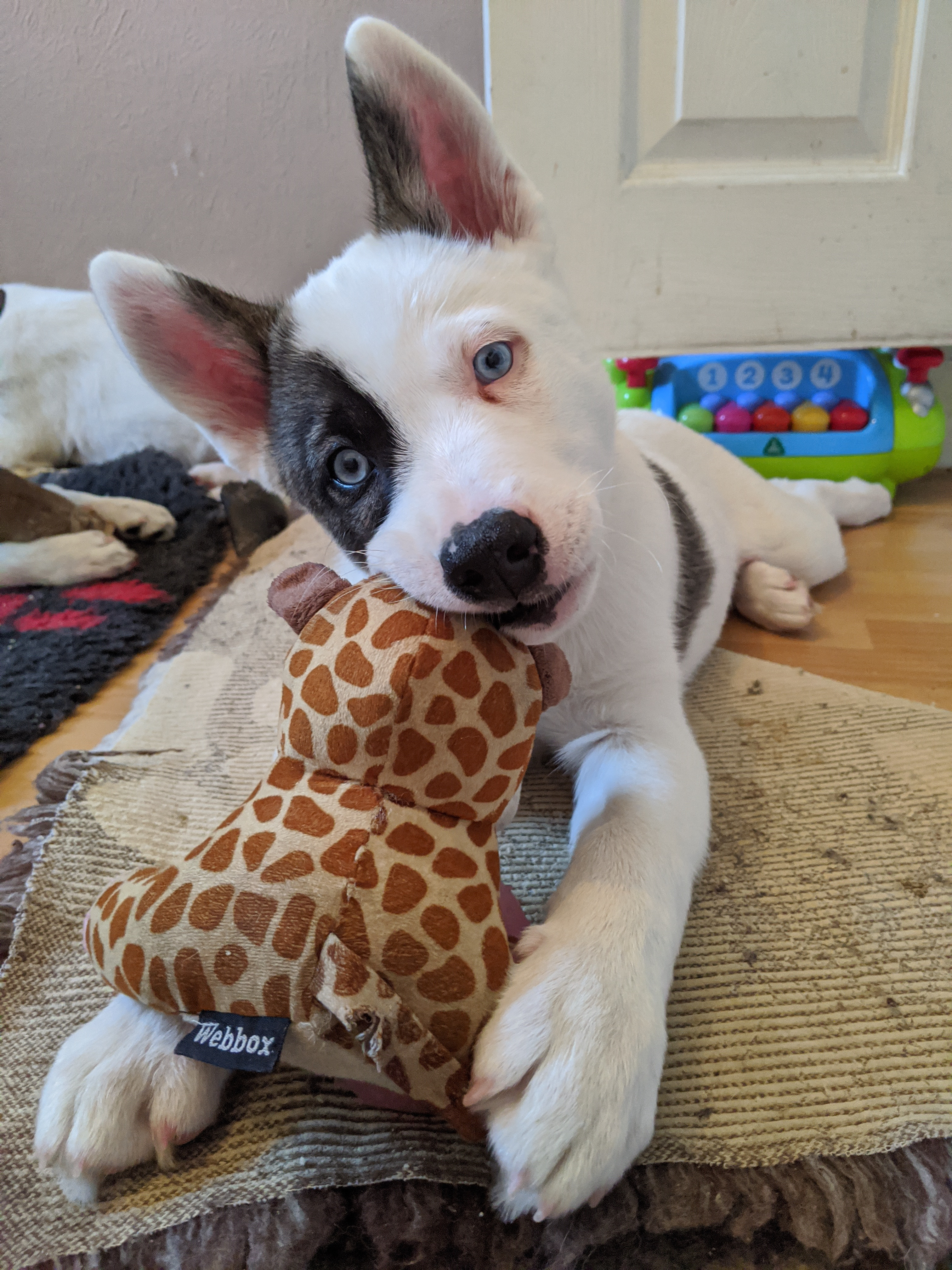Pawsome Puppy Package