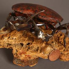 Steel crab on rock