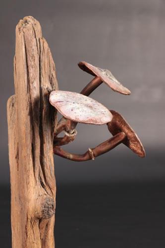 Copper toadstools