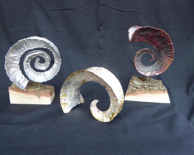 Ammonities