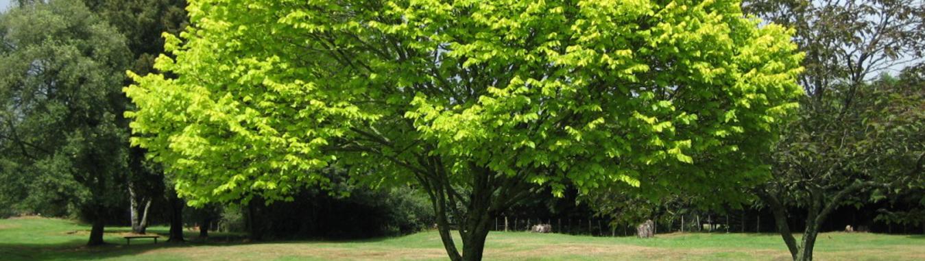 Consultancy tree main