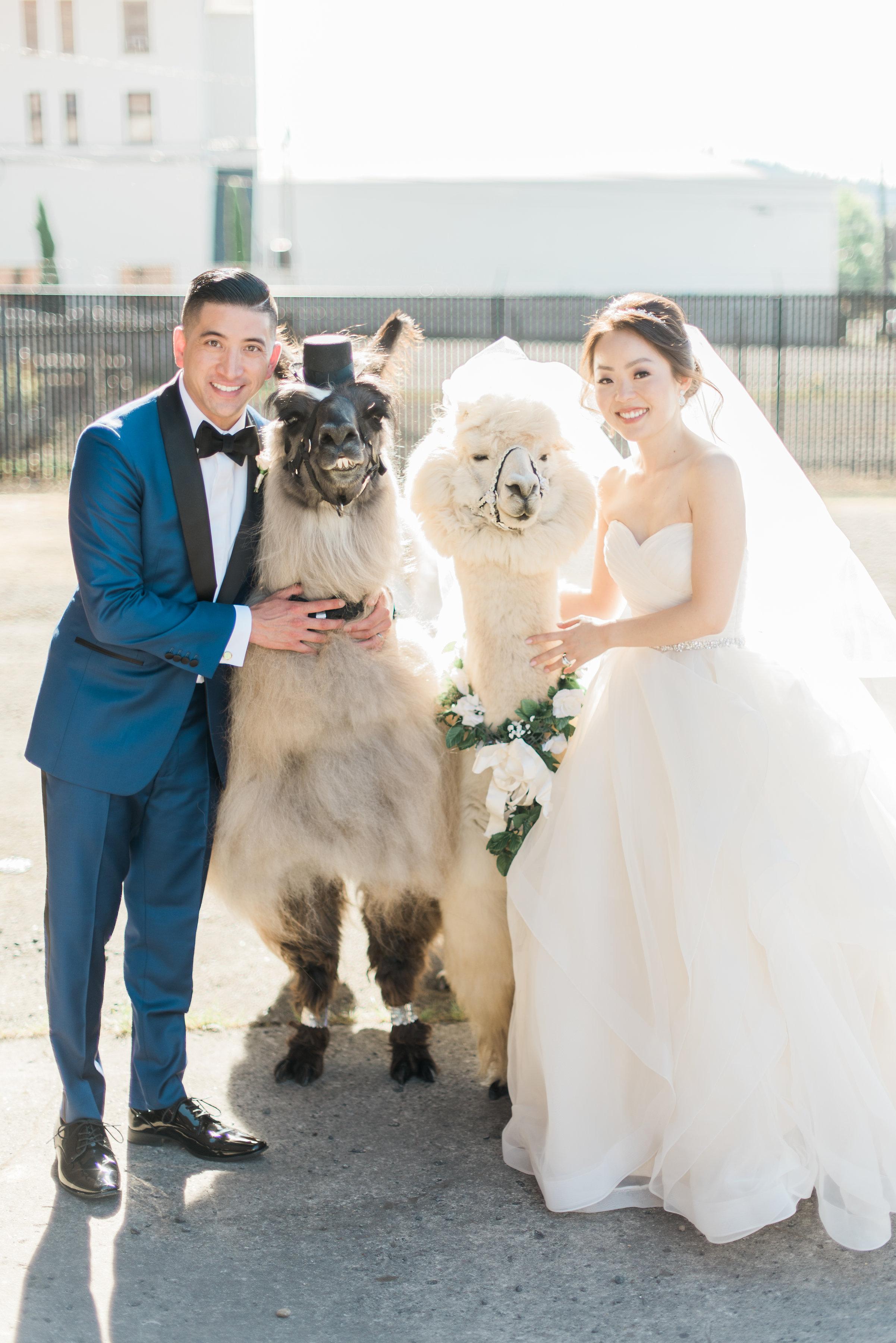 bride_groom_with_wedding_llamas_portland