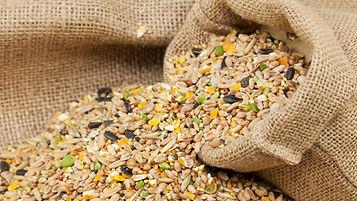 bird-seed-161794612-581754e35f9b581c0b15
