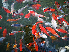 fish-2851722_1920.jpg