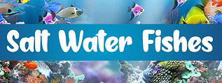 Salt Water Fishes SHOP NOW.jpg