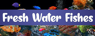 Fresh Water Fishes SHOP NOW.jpg