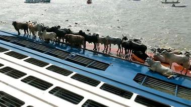 Navio que naufragou em Barcarena deve ser retirado em janeiro