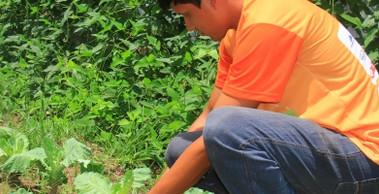 Abertas as inscrições de assistência técnica para agricultores de Barcarena