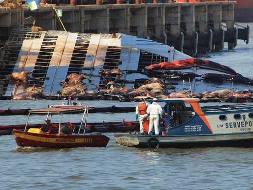 Navio que afundou com 5 mil bois em Barcarena será resgatado