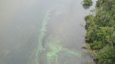 Barcarena: cientistas detectam nível de cianobactérias 22 vezes acima do normal em rios