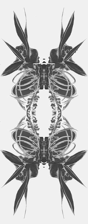 Bird of paradise spine mutation44.jpg