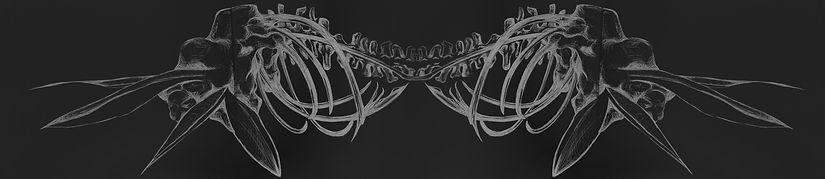 Bird of paradise spine mutation black an