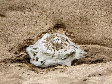 mushroom sand EDIT.jpg