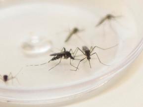 Paraná registra 425 novos casos de dengue