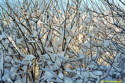 Lux Winter1