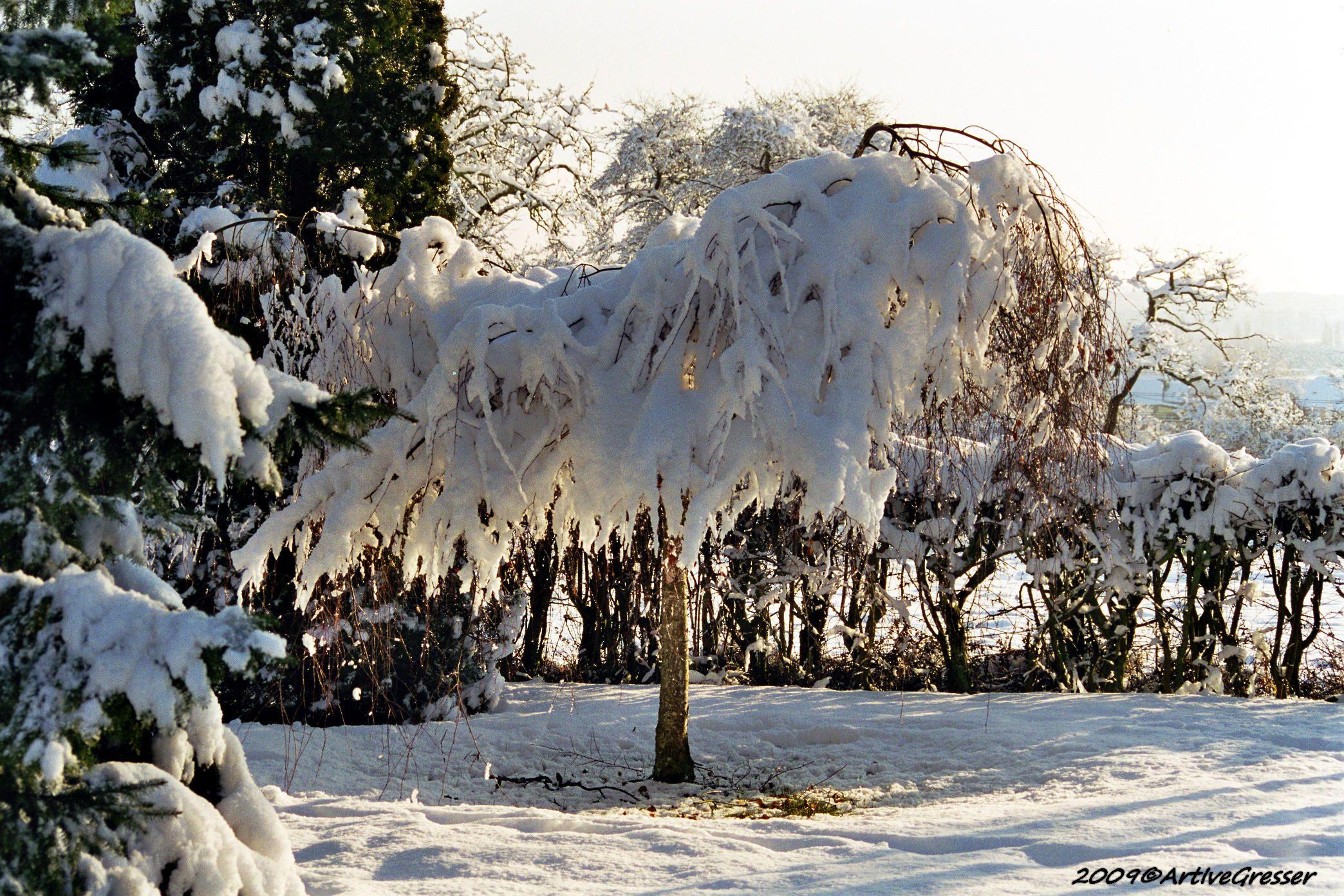 Lux Winter4
