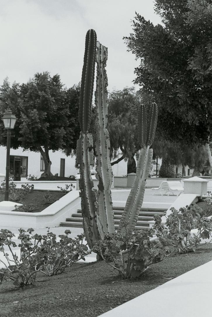 07Kaktus, Pto del Carmen, Lanzarote