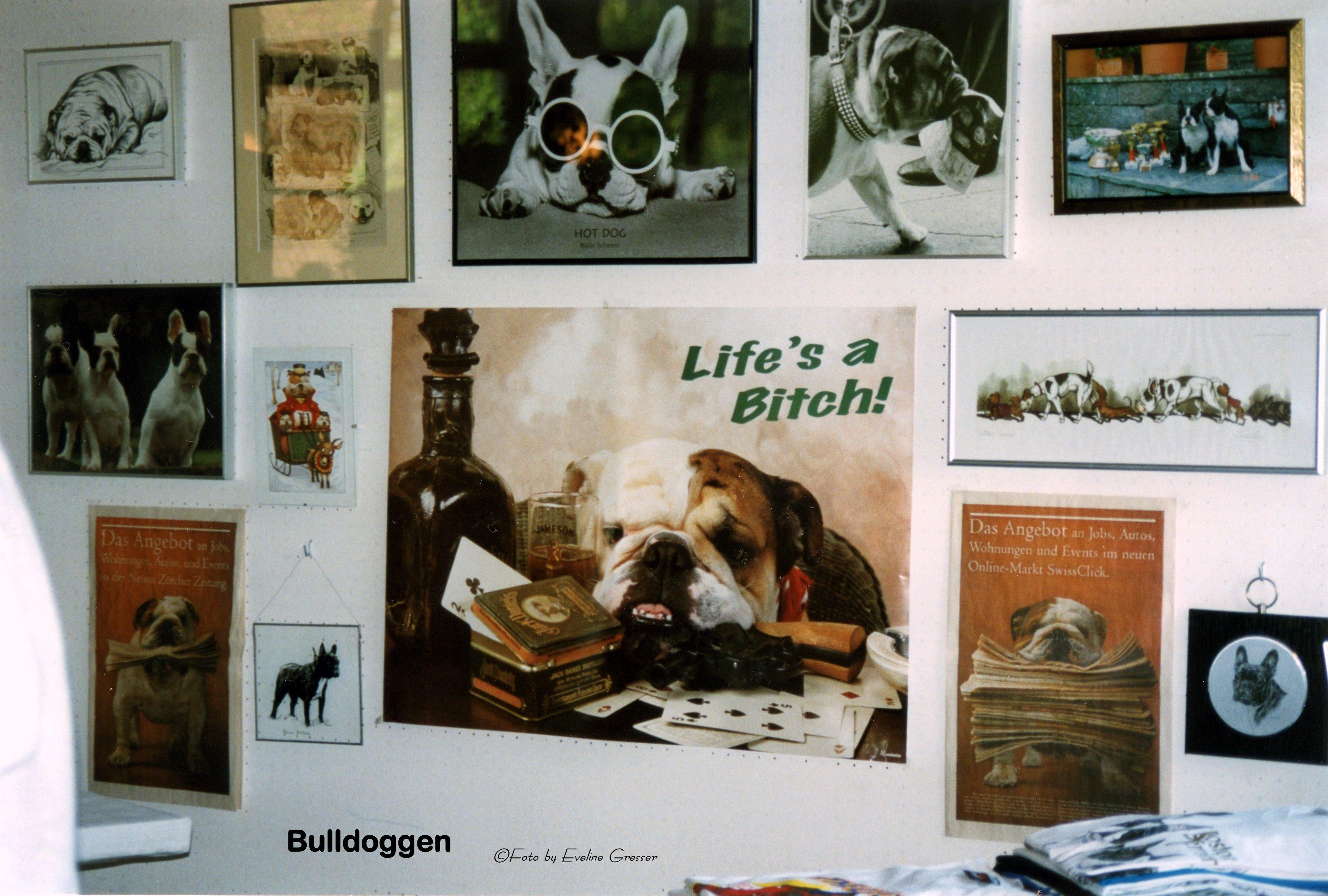 09StandBulldogs
