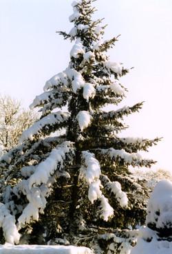 Lux Winter8
