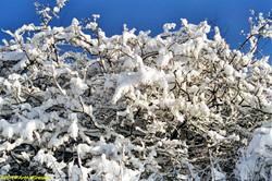 Lux Winter2