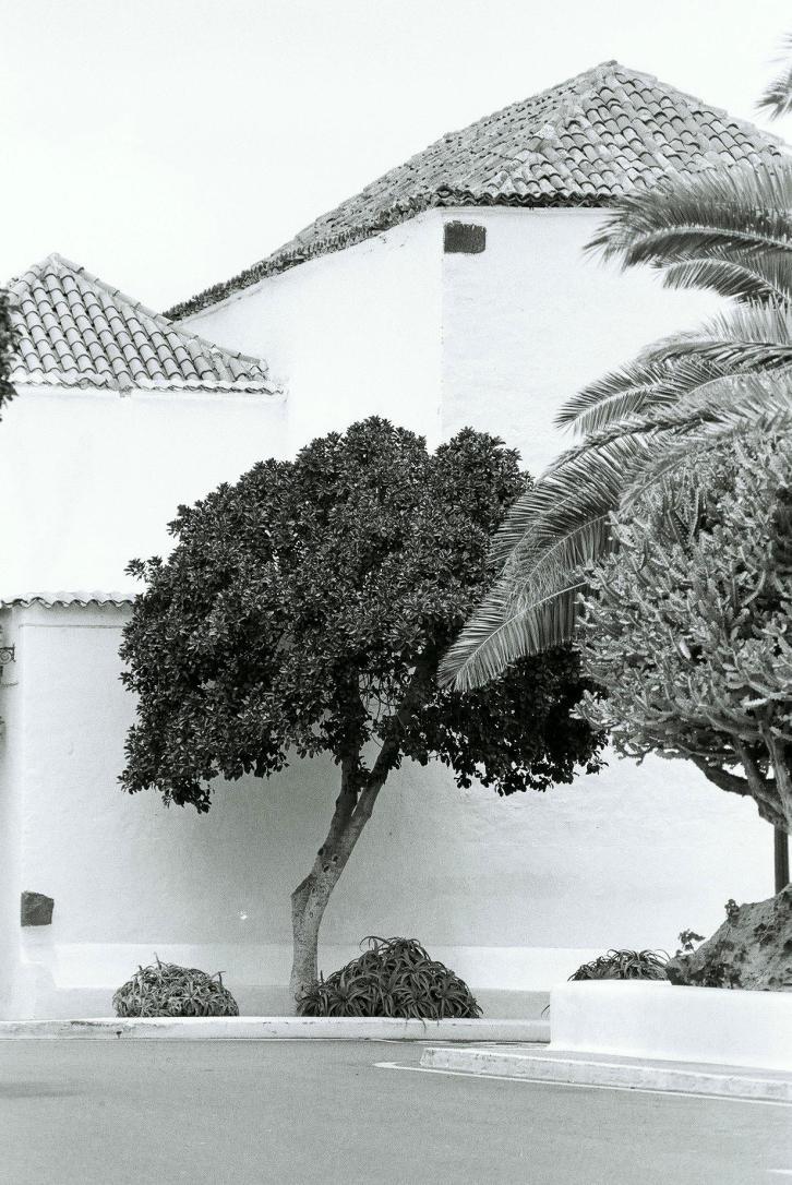 01Baum, Pto del Carmen, Lanzarote - Kopie