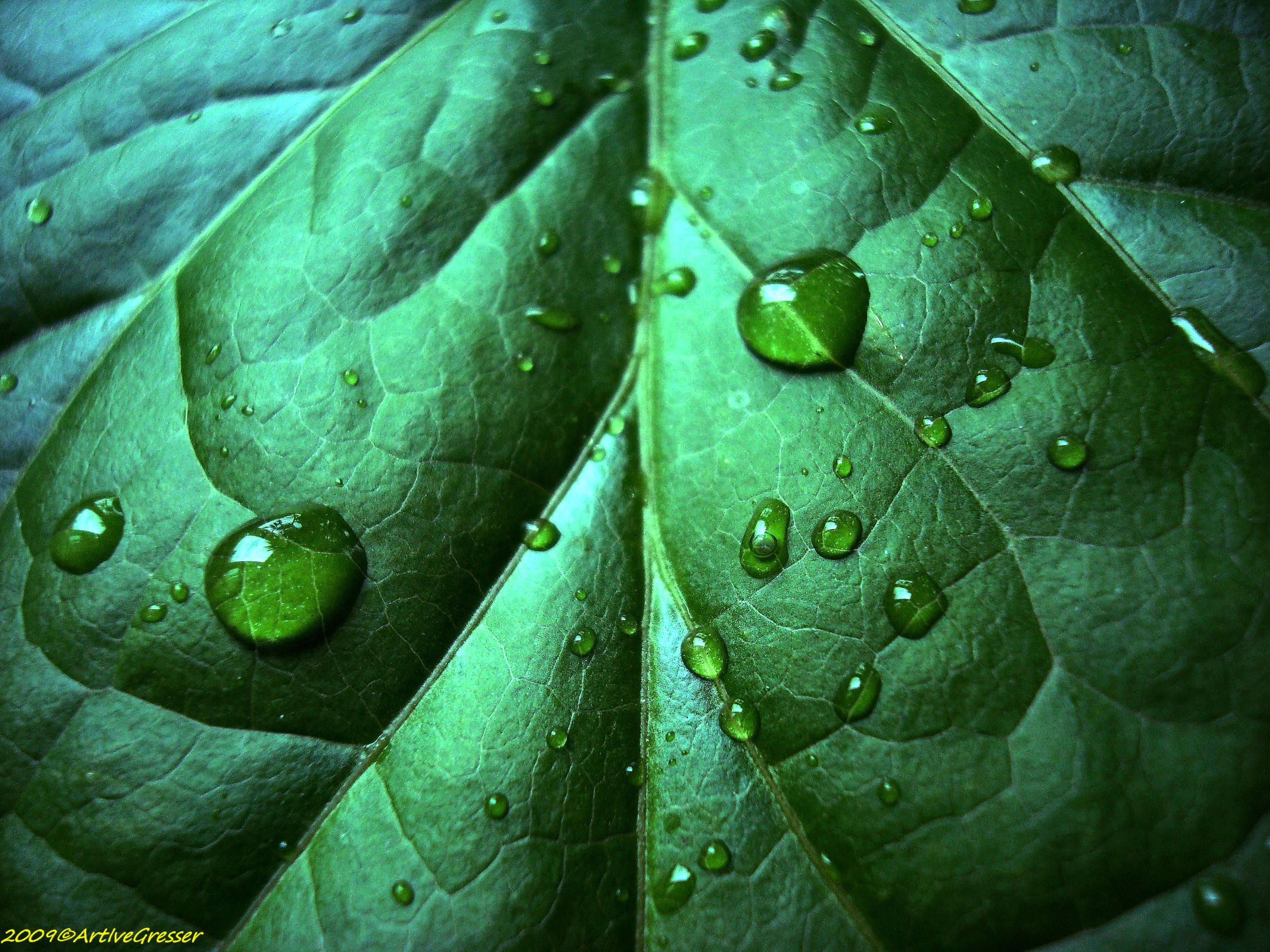 33Blatt_dunkelgrün