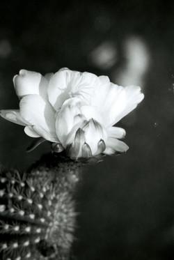 03Kaktus, Jardin de Cactus, Lanzarote