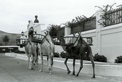 06Kamel, Lanzarote